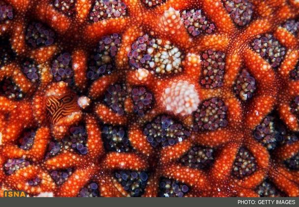 عکسای قشنگتر از ستاره دریایی