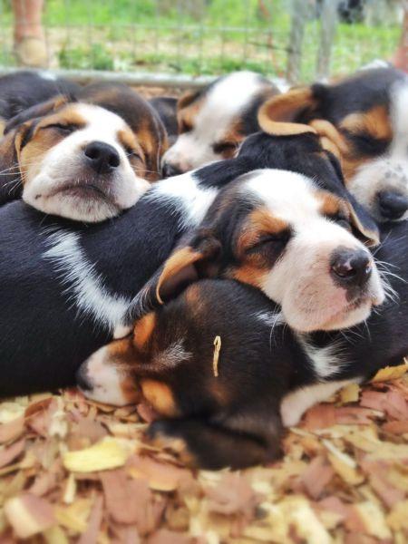 حیوانات خوشخواب + عکس