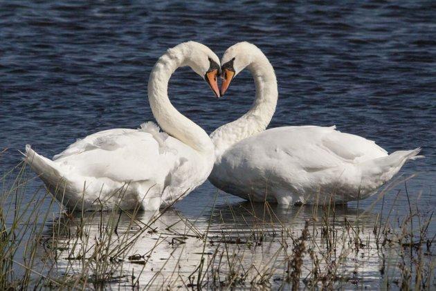 شگفت انگیزترین شکل های قلبی در دنیا + عکس