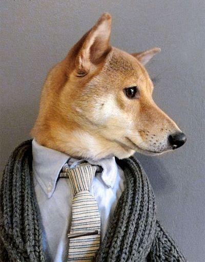 خوش تیپ ترین سگ دنیا + عکس