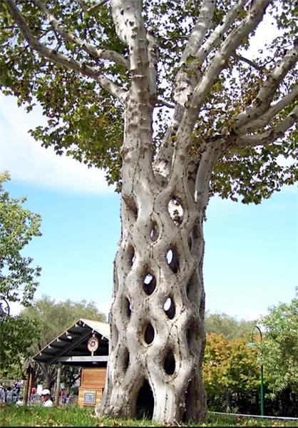 عکس های زیبا از درختان عجیب
