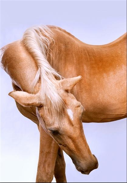 عکس اسب های وحشی