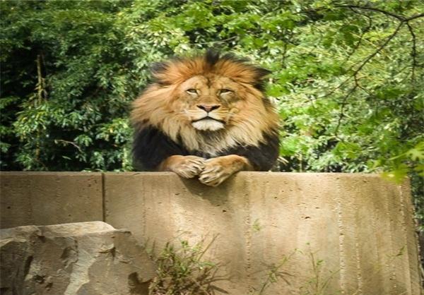 عکس گربه سانان
