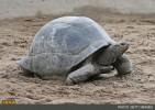 پیرترین حیوانات دنیا + عکس