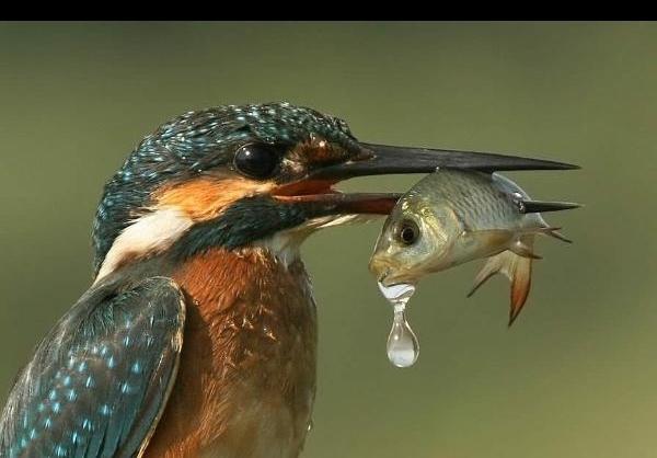 عکس پرندگان