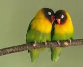 چرا پرندههای ماده بیوفایند؟