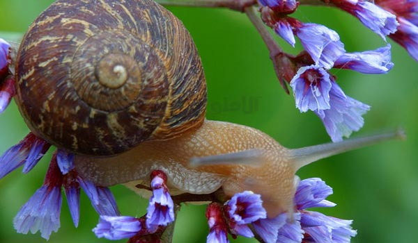 Cute-Snail-on-Flowers