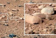 رصد یک موش صحرایی روی مریخ