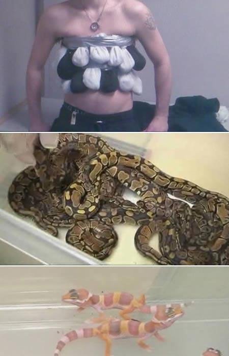 قاچاق حیوان زیر لباس