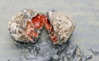 عجیب ترین سنگ روی زمین +عکس