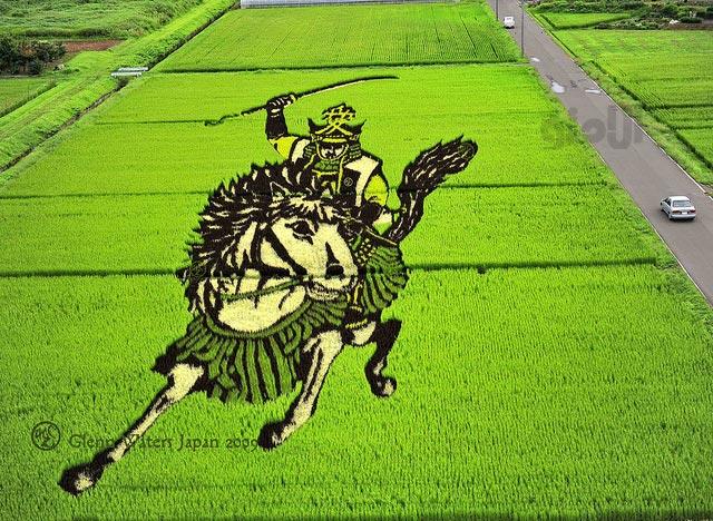 تانبو؛ هنرنمایی در شالیزار