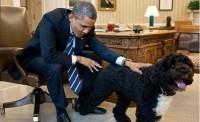 اضافه شدن يک عضو جديد به خانواده اوباما / عکس