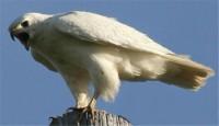 فروش میلیاردی عقاب ایرانی به کویت + عکس