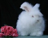 عجیب ترین خرگوش دنیا + عکس