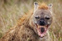 زشت ترین خنده حیات وحش + عکس