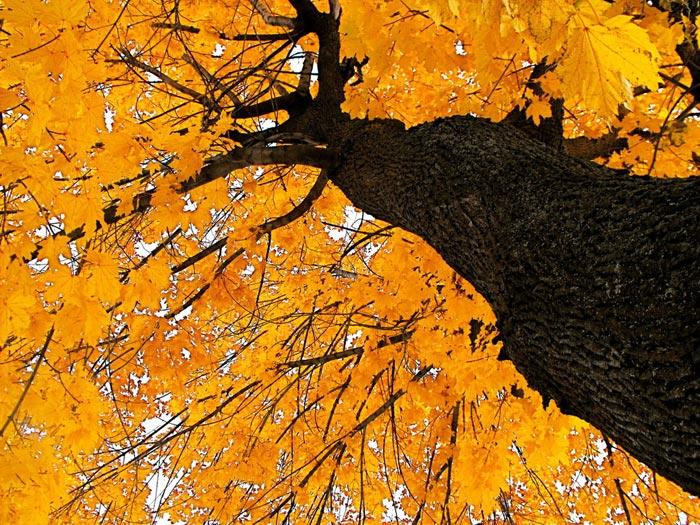 عکس های زیبا از طبیعت پاییزی