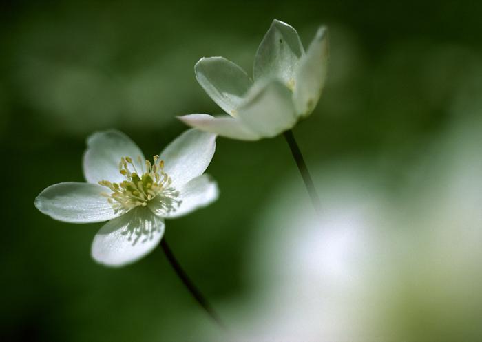عکس و متن عاشقانه گل