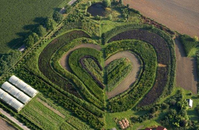 عکس های قلب در طبیعت