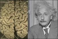 مهمترین تفاوت مغز انیشتین با سایر انسانها