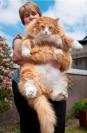 بزرگترین و عجیب ترین حیوانات خانگی دنیا + عکس