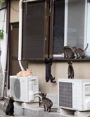 آشنایی با جزیره گربه ها + عکس