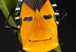 عجیبترین چهرهها میان حشرات +عکس