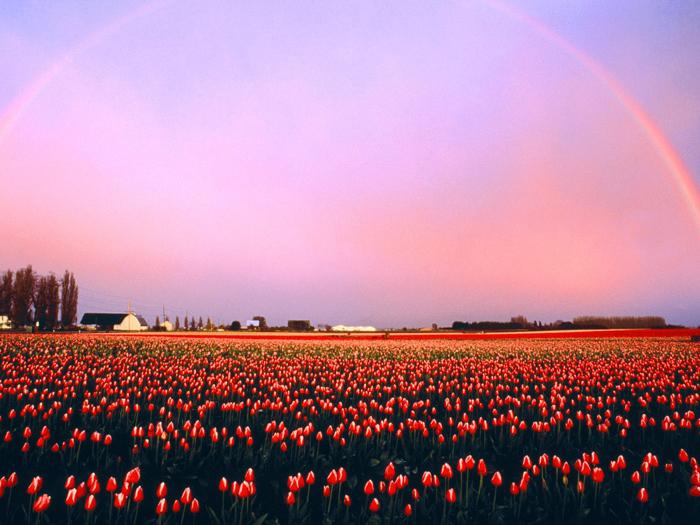 Rainbow 005 عکس های رنگین کمان های زیبا