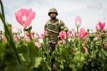 بحران وضعیت مواد مخدر در افغانستان