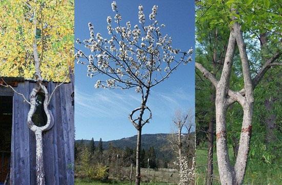 هنرنمایی با درختان / عکس