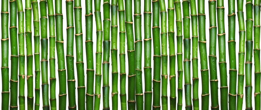 نگهداری از bamboo