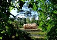 خانه درختی 55هزار یورویی / عکس