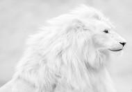 شیر سفید افسانهای+عکس