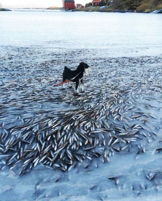 یخ زدن ماهی در آب
