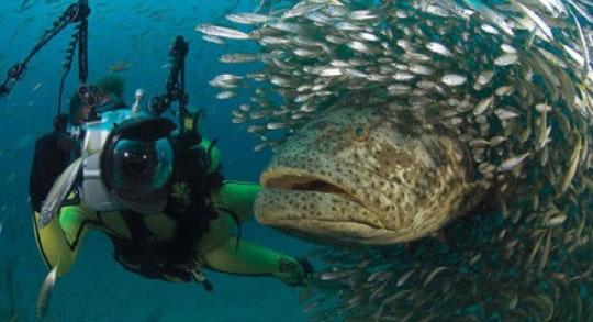 قاتلان دریا,Goliath Grouper
