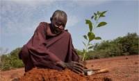 پیرمردی که صحرای آفریقا را از بین برده است +عکس