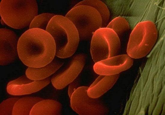 سلولای قرمز