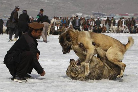 جنگ مرگبار سگا / عکس