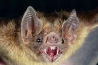 خون آشام های باورنکردنی در دنیای حیوانات +عکس