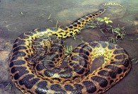 6 حیوان عجیب در جنگل های آمازون +عکس