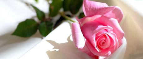 گل رز صورتی,مقاوت دربرابر سختی ها و مشکلات زندگی