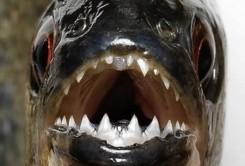 عجیبترین دندانها در میان حیوانات / عکس