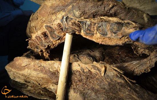 گاومیش 9000 ساله