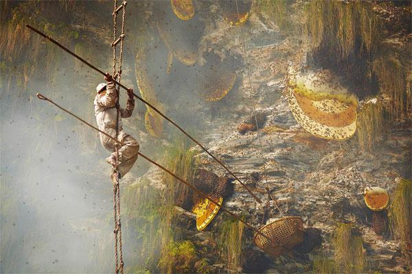 شکارچیان عسل / عکس