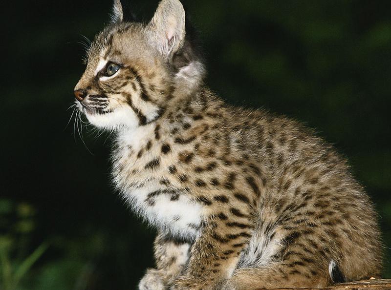 cat0a عکس گربه ناز - عکس بچه گربه