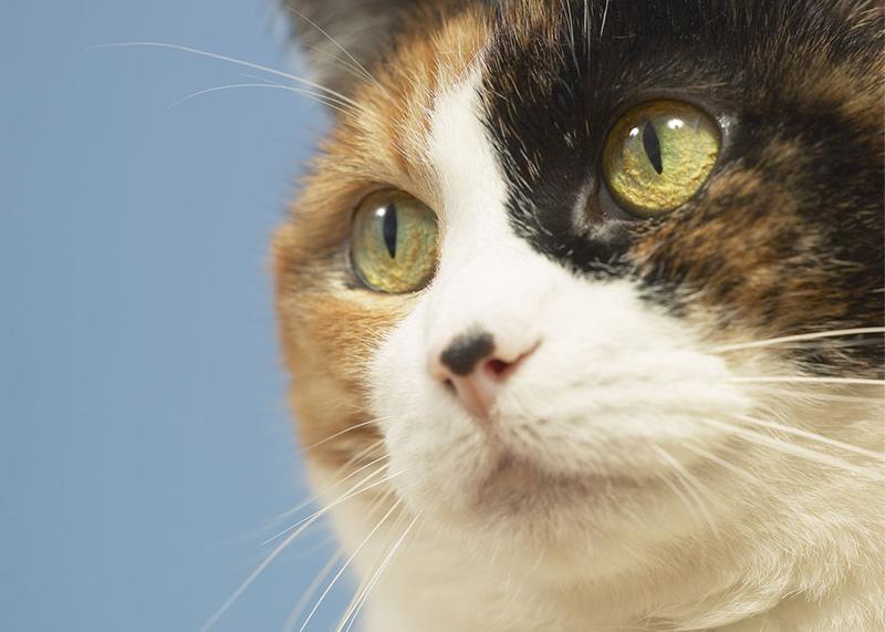 cat1v عکس گربه ناز - عکس بچه گربه