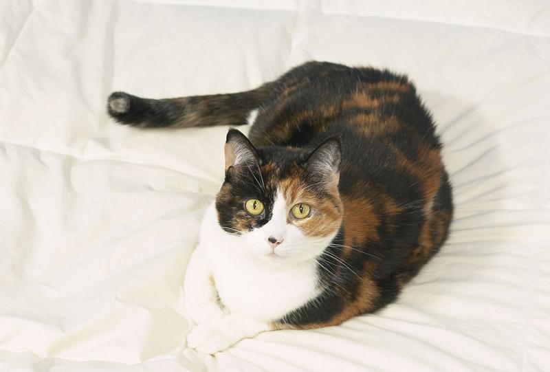 cat2d عکس گربه ناز - عکس بچه گربه