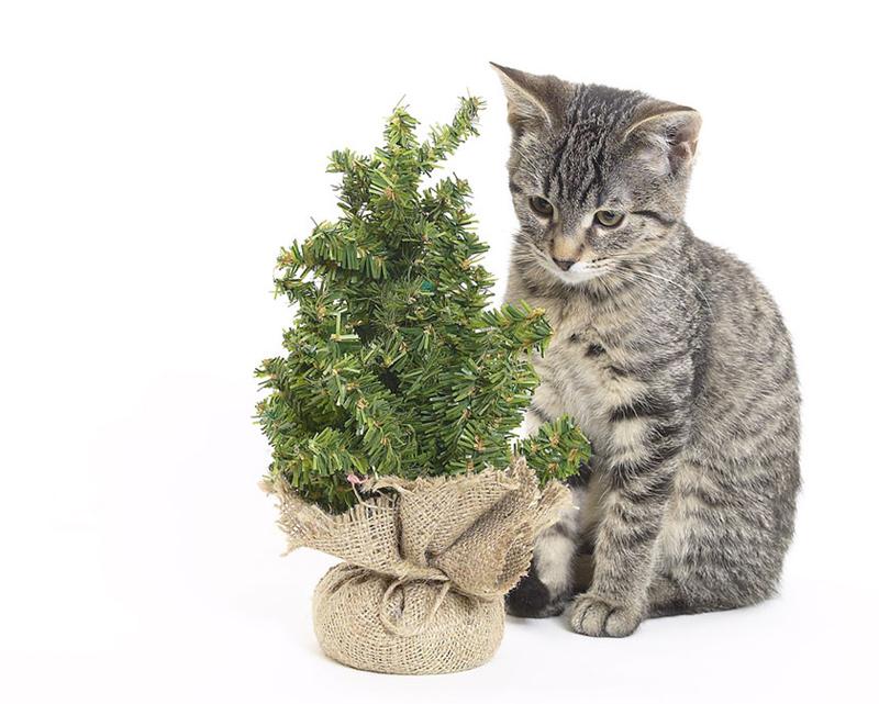 cat7m عکس گربه ناز - عکس بچه گربه