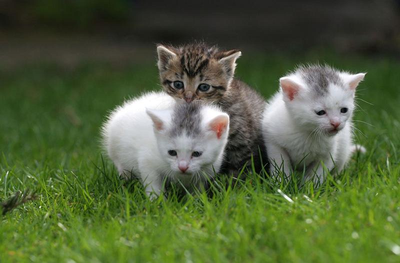 cats 12e عکس گربه ناز - عکس بچه گربه