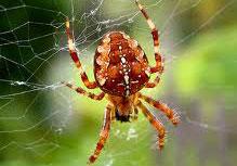 5 قدرت باورنکردنی عنکبوت ها + عکس