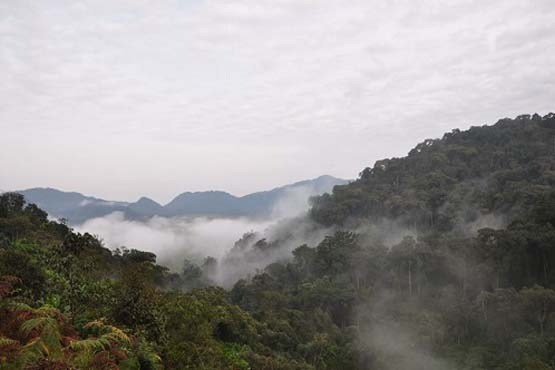 پارک ملی آتشفشانای ویرونگا